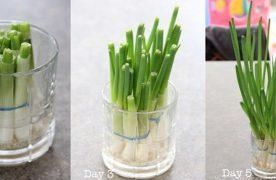 Cách trồng hành lá trong nước đơn giản và dễ thực hiện
